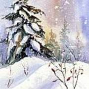 Snow Spruce I Art Print