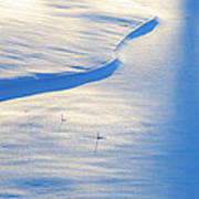 Snow Sunlight And Shadows Art Print