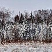 Snow Tree Line Art Print by Gary Gish