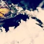 Snow Wildflower Art Print