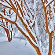 Snow Wonderful Snow - Greensboro North Carolina Art Print by Dan Carmichael