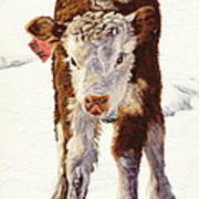 Country Life Winter Baby Calf Art Print