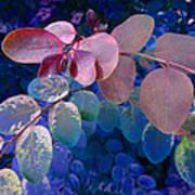 Snowbush Blue Art Print