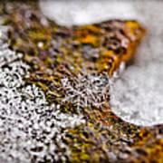 Snowflake On Rust Art Print