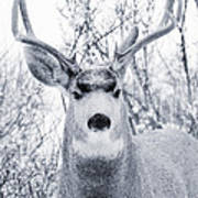 Snowstorm Deer Art Print