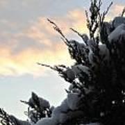 Snowvember Sunrise Art Print
