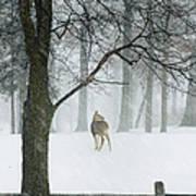 Snowy Deer Art Print