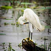 Snowy Egret In Swamp Art Print