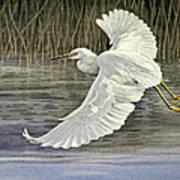Snowy Egret Art Print