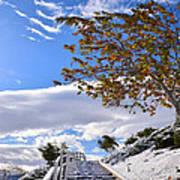 Snowy Lake Elsinore Art Print