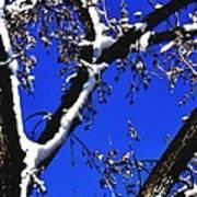 Snowy Limbs 14051 Art Print