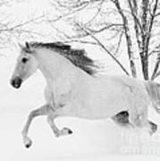 Snowy Mare Leaps Art Print