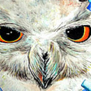Snowy Owl - Female - Close Up Art Print by Daniel Janda