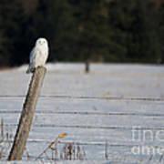 Snowy Owl Landscape Art Print