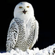 Snowy Owl On A Twilight Winter Night Art Print by Inspired Nature Photography Fine Art Photography
