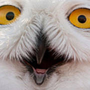 Snowy Owl Up Close And Personal Art Print