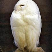 Snowy Owl Vintage  Art Print
