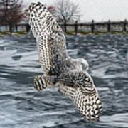 Snowy Owl Wingspan Art Print