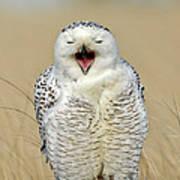 Snowy Owl Yawning Art Print