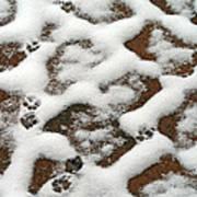 Snowy Path And Paw Prints Art Print