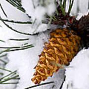 Snowy Pine Cone Art Print