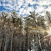 Snowy Pines With Sunflair Art Print