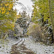 Snowy Road In Fall Art Print