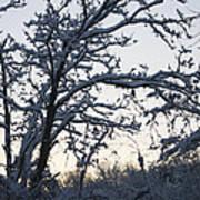 Snowy Sunrise Art Print