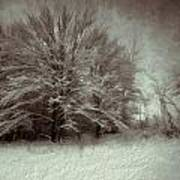 Snowy Treasure Art Print