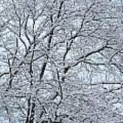 Snowy Tree Limb Maze Art Print