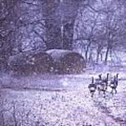 Snowy Turkey Trail Art Print