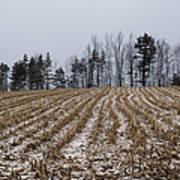 Snowy Winter Cornfields Art Print