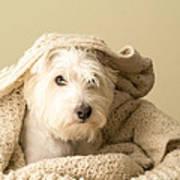 Snuggle Dog Art Print