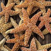 So Many Starfish Art Print