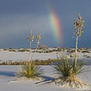 Soaptree Yucca And Rainbow White Sands Art Print