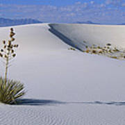 Soaptree Yucca At White Sands Nm Art Print
