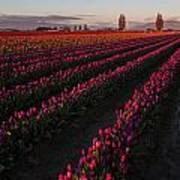 Soaring Spring Colors In Skagit Art Print