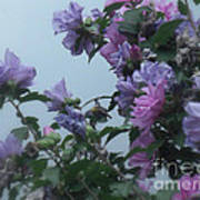 Soft Blues And Pink - Spring Blossoms Art Print