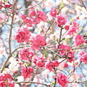 Soft Colors Of Spring Art Print