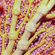 Soft Corals 1 Art Print