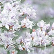 Soft Lavender Dancing Azalea Flowers Art Print