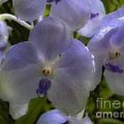 Soft Purple Orchids Art Print
