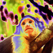 Solarized White-faced Monkey Art Print