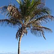 Sole Palm Art Print