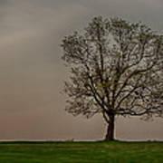 Solitary Tree Art Print