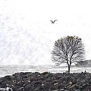 Somber Flight Wc Art Print