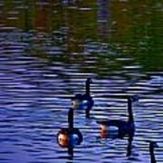 Song Of Geese Art Print