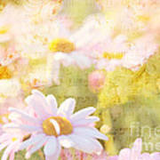 Song Of Spring I - Lovely Soft Pink Daisies Art Print