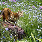 Sonoma In The Wildflowers Art Print