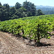 Sonoma Vineyards In The Sonoma California Wine Country 5d24512 Art Print